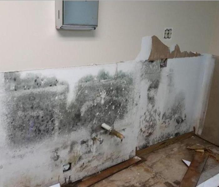Mold Remediation Mold 101 : What to Know